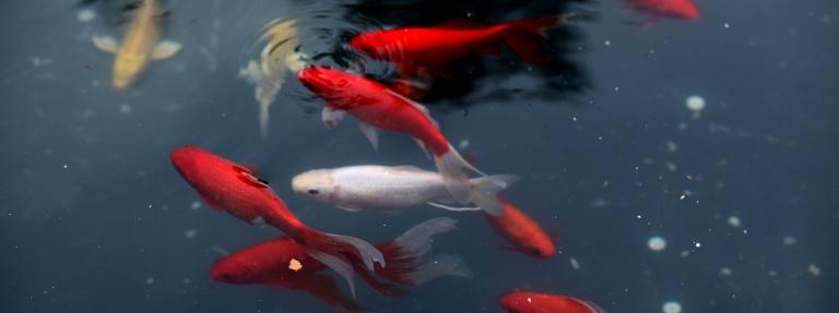 fish_edit2